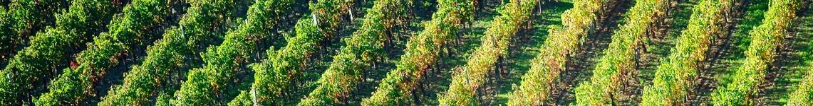 Vin d'Alsace AOC - Vente de Vin en ligne - Viniphile